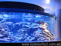 Oceanworld Manly - Small fish tank